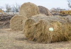 Balle di fieno in un campo, un paesaggio di inverno Immagine Stock