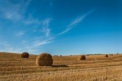 Balle di paglia dorata sul campo agricolo dopo la raccolta Fotografie Stock Libere da Diritti