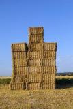 Balle di paglia in un campo dopo il raccolto fresco sotto cielo blu Immagini Stock Libere da Diritti
