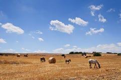 Balle e cavalli di fieno Fotografia Stock