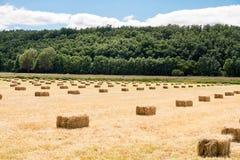 Balle linearmente distribuite dell'erba Immagine Stock