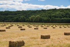 Balle linearmente distribuite dell'erba Fotografia Stock Libera da Diritti
