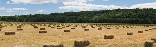 Balle linearmente distribuite dell'erba Immagine Stock Libera da Diritti