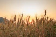 Balle nel campo e nel tramonto, fuoco molle Immagini Stock