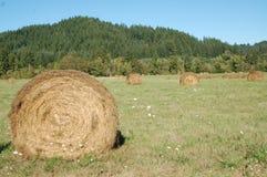 Balle rotolate di fieno in valle del Willamette dell'Oregon fotografia stock