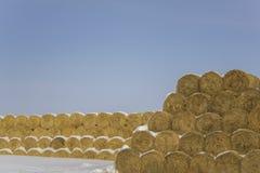 Balle rotonde della bugia gialla asciutta del fieno nelle file sotto la neve contro un cielo blu pulito fotografie stock