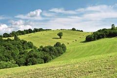 Balle sole di fieno e dell'albero sotto cielo blu Immagine Stock
