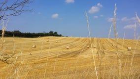 Balle sul campo raccolto di estate Fotografie Stock Libere da Diritti