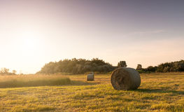 Ballen auf dem Feld Stockfoto