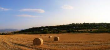 Ballen auf dem Weizengebiet Stockbild