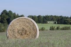 Ballen Heu auf den Bauernhofgebieten und Ackerland im Gras Lizenzfreies Stockbild