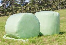 Ballen Silage der grünen Ernte, oben eingewickelt im weißen Plastik für stor Stockfotografie