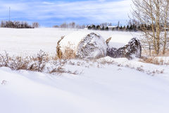 Ballen von Hay Laying In Snow On-Feld in Alberta Canada Lizenzfreie Stockbilder