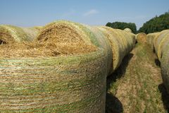 Ballen Weizenstroh verpackten mechanisch in einer grünen Plastikmasche, nachdem sie geerntet hatten Ländliche Landschaft an einem lizenzfreies stockfoto