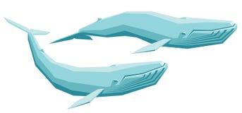 ballena azul Imagen de archivo libre de regalías
