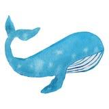 ballena azul Imagenes de archivo