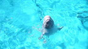 Ballena de la beluga almacen de metraje de vídeo
