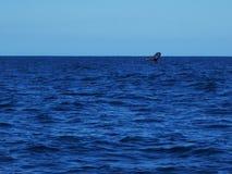 Ballena del salto en el Océano Índico foto de archivo