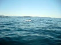 Ballena que sale su cola del agua Imagen de archivo