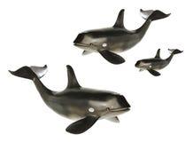 ballenas Foto de archivo libre de regalías