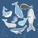 ballenas Fotografía de archivo