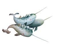 ballenas Imágenes de archivo libres de regalías