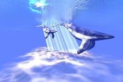 Ballenas azules Imagenes de archivo