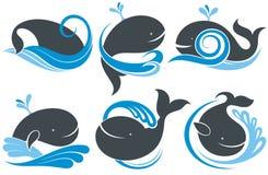 Ballenas con el chapoteo del agua Imagen de archivo