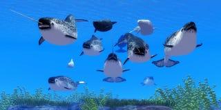 Ballenas del narval ilustración del vector