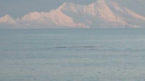 Ballenas en la Antártida - península antártica - calentamiento del planeta almacen de video