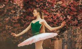 Ballerina dancing against the background of flowering sakura trees and falling petals. Ballerina dancing in a beautiful tutu against the background of flowering royalty free stock image