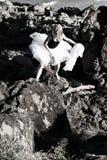 Ballerina di scalata di roccia Fotografie Stock