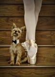 Ballerina och hund arkivbild