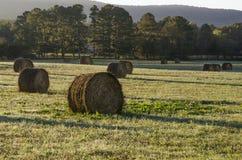Balles de foin dans le domaine Photo libre de droits