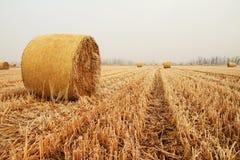 Balles de foin dans un domaine de blé Images libres de droits