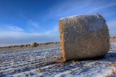 Balles de foin en hiver Photographie stock libre de droits