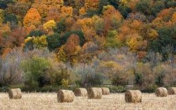 Balles de foin et couleur d'automne Photo libre de droits