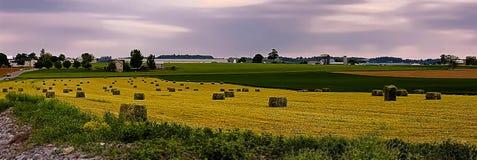 Balles de foin s'étendant dans un domaine, le comté de Lancaster, Pennsylvanie image stock