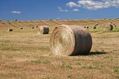 Balles de foin sur des terres cultivables Photo libre de droits