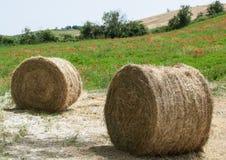 Balles de foin sur le champ après récolte Photo libre de droits