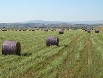 Balles de foin violettes dans un jour ensoleillé Photos libres de droits