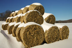Balles de fourrage de maïs en hiver image stock