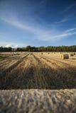 Balles de paille dans un champ de maïs Images stock