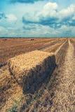 Balles de paille de foin de blé dans le domaine après récolte Image stock