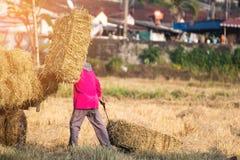 Balles de paille de riz sur le fonctionnement de gisement et d'agriculteur de riz, conception naturelle Photos libres de droits