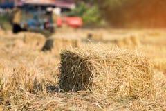 Balles de paille de riz sur le fonctionnement de gisement et d'agriculteur de riz, conception naturelle Photos stock