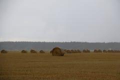 Balles de paille sur un champ en Suède par jour pluvieux d'automne Photos libres de droits