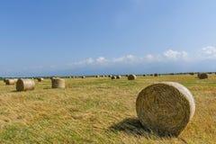 Balles rondes de paille sur le champ de grain coupé Photo libre de droits