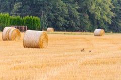 Balles sur une chaume pendant une récolte Photo libre de droits