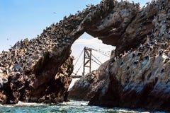 Free Ballestas Islands, Paracas, Peru Royalty Free Stock Image - 39173236